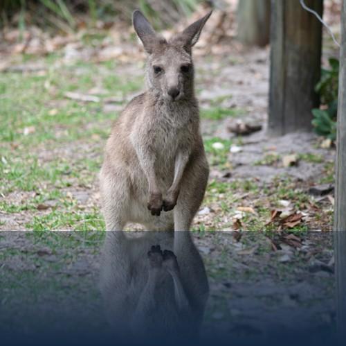 Oliver Weyl australien-natur11.jpg