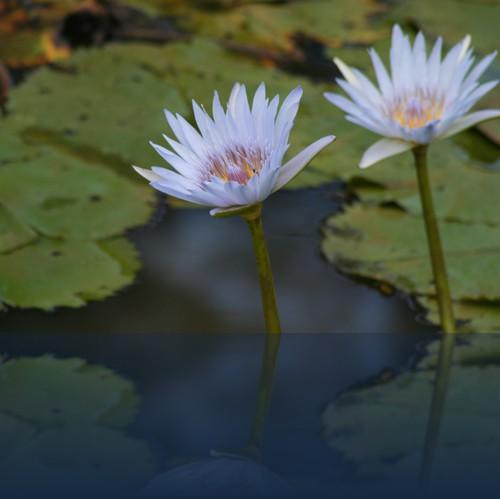 Oliver Weyl australien-natur116.jpg