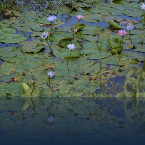 Oliver Weyl australien-natur117.jpg