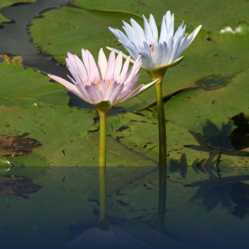 Oliver Weyl australien-natur119.jpg