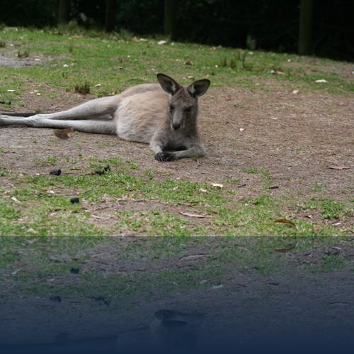 Oliver Weyl australien-natur12.jpg