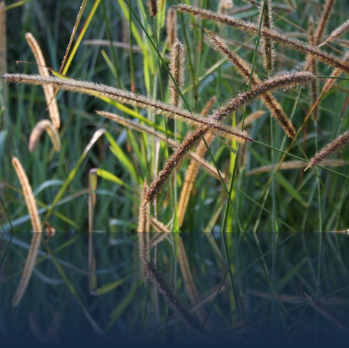 Oliver Weyl australien-natur120.jpg