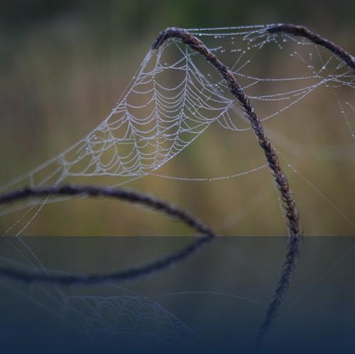 Oliver Weyl australien-natur125.jpg