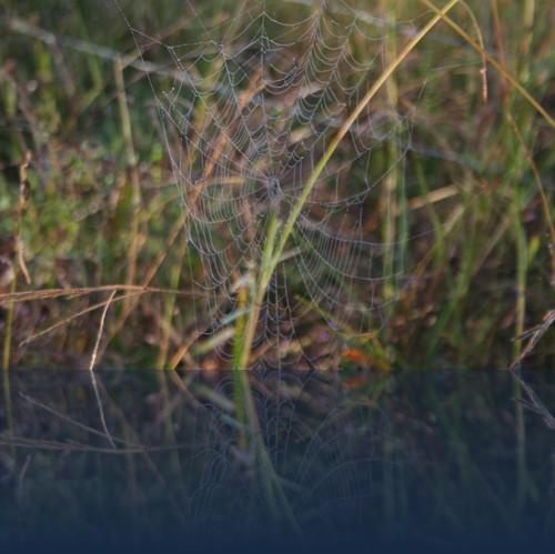 Oliver Weyl australien-natur126.jpg