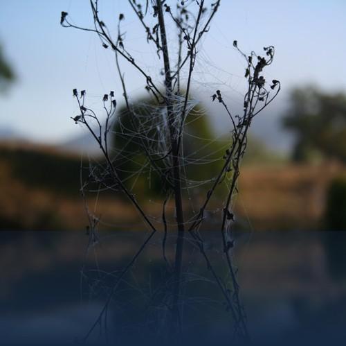 Oliver Weyl australien-natur127.jpg