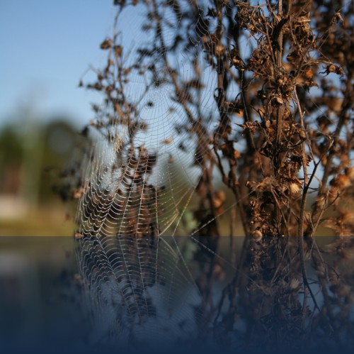 Oliver Weyl australien-natur128.jpg