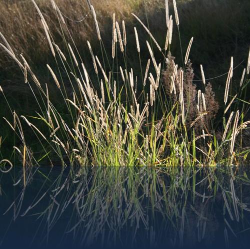 Oliver Weyl australien-natur129.jpg