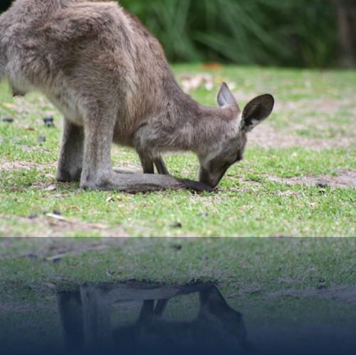 Oliver Weyl australien-natur13.jpg