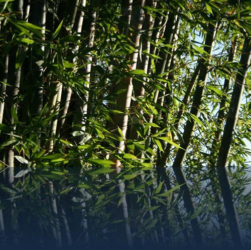 Oliver Weyl australien-natur130.jpg