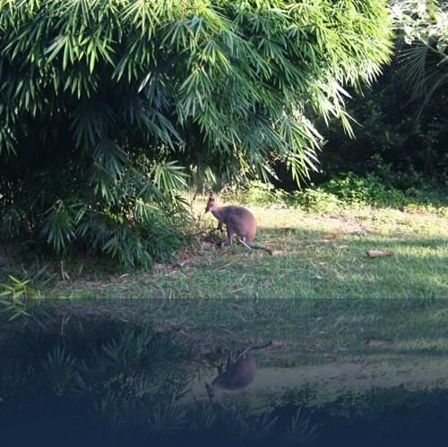 Oliver Weyl australien-natur131.jpg