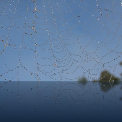 Oliver Weyl australien-natur140.jpg