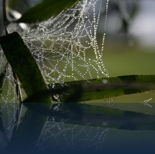 Oliver Weyl australien-natur146.jpg