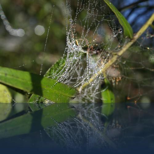 Oliver Weyl australien-natur147.jpg