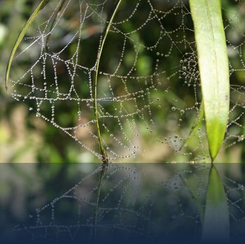 Oliver Weyl australien-natur148.jpg