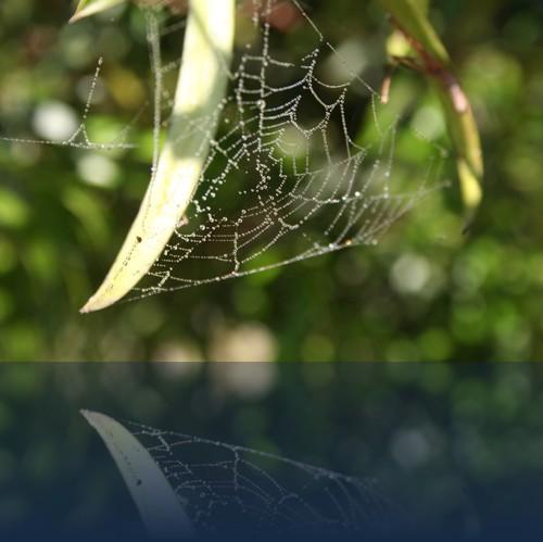 Oliver Weyl australien-natur149.jpg