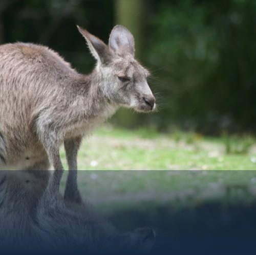 Oliver Weyl australien-natur15.jpg