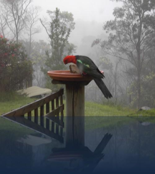 Oliver Weyl australien-natur170.jpg