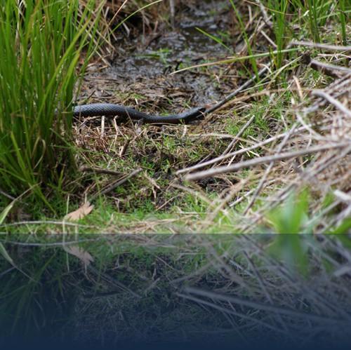 Oliver Weyl australien-natur18.jpg