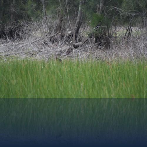 Oliver Weyl australien-natur19.jpg