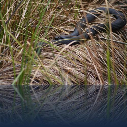 Oliver Weyl australien-natur20.jpg