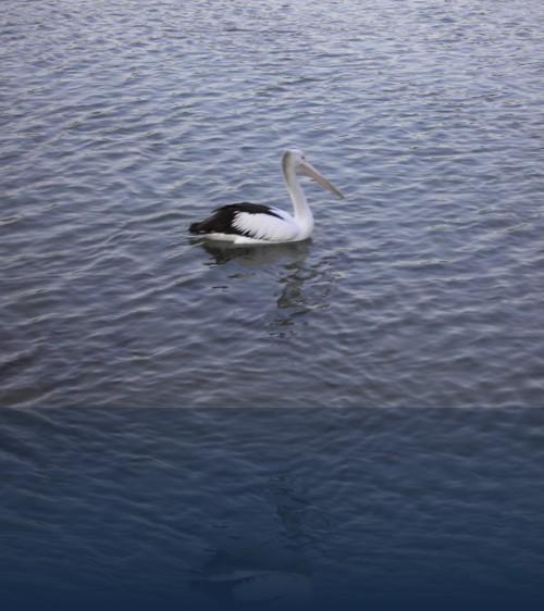 Oliver Weyl australien-natur201.jpg