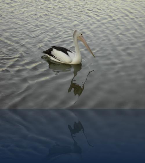 Oliver Weyl australien-natur202.jpg