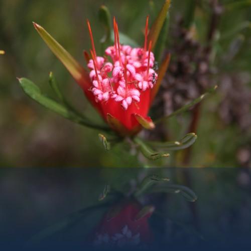 Oliver Weyl australien-natur21.jpg