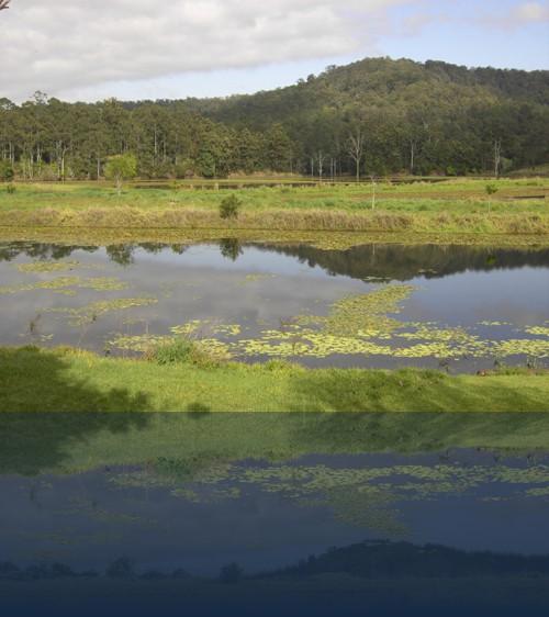 Oliver Weyl australien-natur218.jpg
