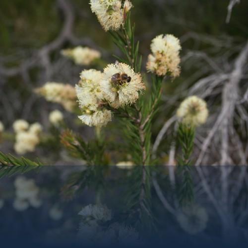 Oliver Weyl australien-natur23.jpg