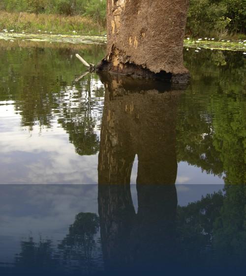 Oliver Weyl australien-natur231.jpg