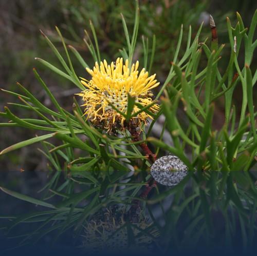 Oliver Weyl australien-natur24.jpg