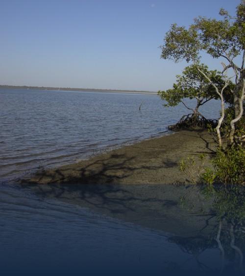 Oliver Weyl australien-natur244.jpg