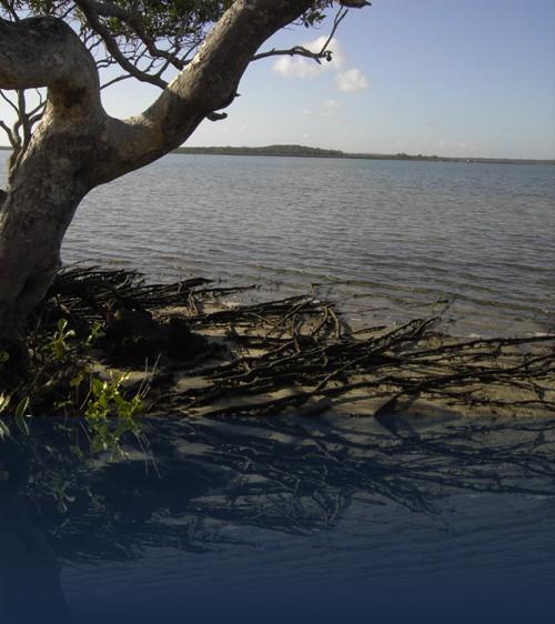 Oliver Weyl australien-natur246.jpg