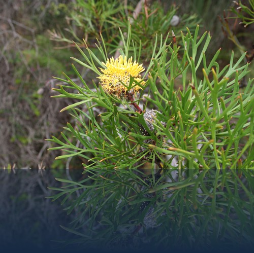 Oliver Weyl australien-natur25.jpg
