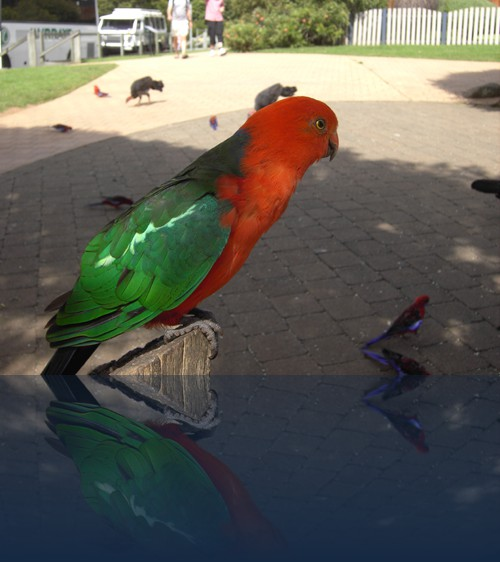 Oliver Weyl australien-natur251.jpg