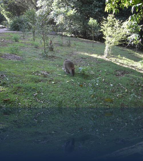 Oliver Weyl australien-natur255.jpg