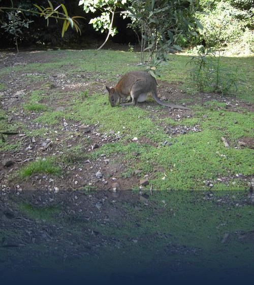 Oliver Weyl australien-natur256.jpg