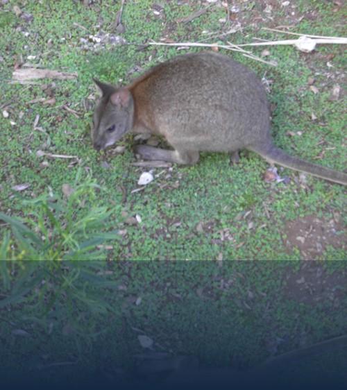 Oliver Weyl australien-natur258.jpg