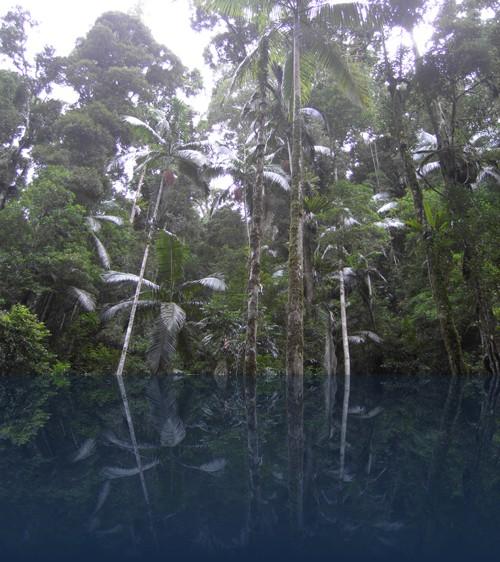 Oliver Weyl australien-natur264.jpg