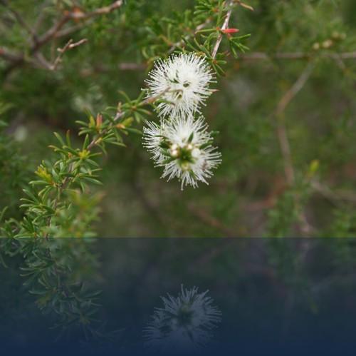 Oliver Weyl australien-natur27.jpg