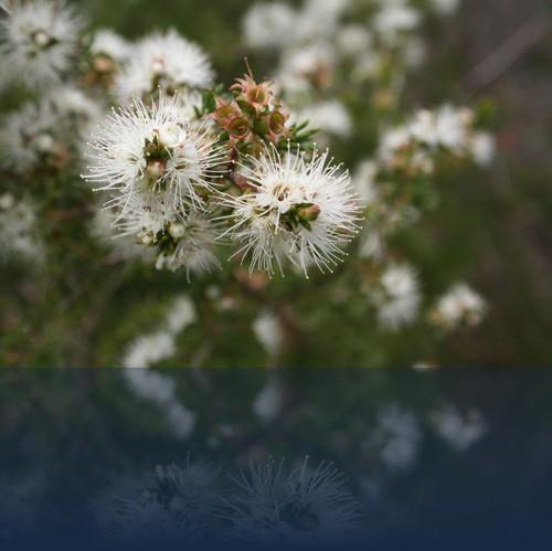Oliver Weyl australien-natur28.jpg