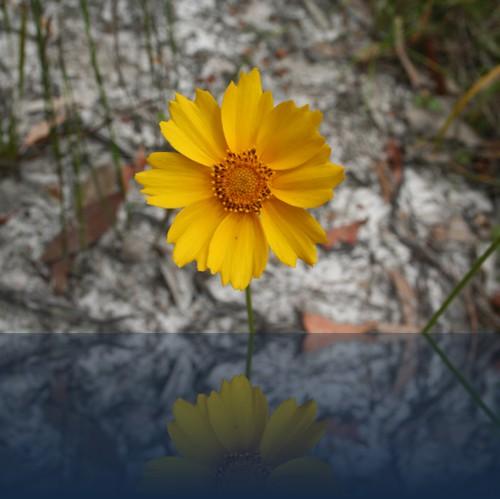 Oliver Weyl australien-natur29.jpg