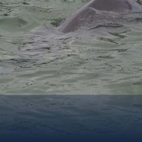 Oliver Weyl australien-natur3.jpg
