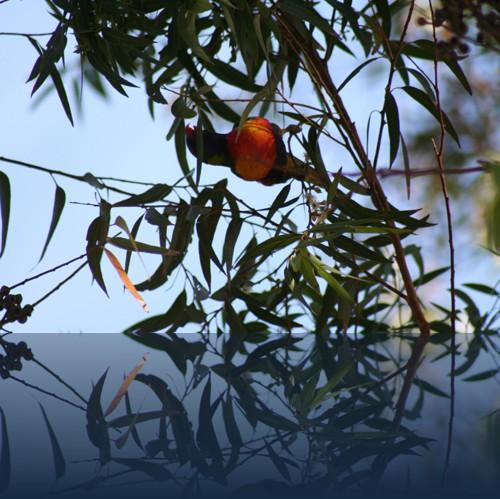 Oliver Weyl australien-natur43.jpg