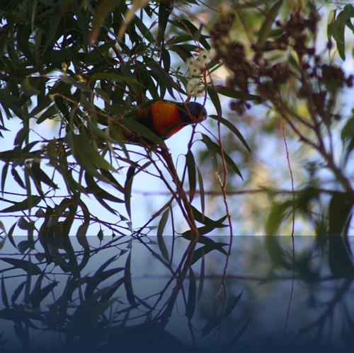 Oliver Weyl australien-natur44.jpg