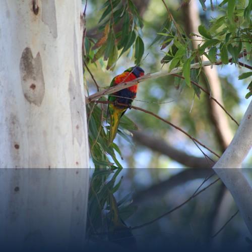 Oliver Weyl australien-natur45.jpg