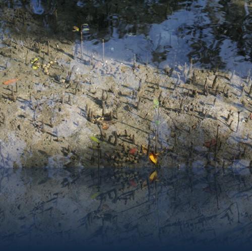 Oliver Weyl australien-natur46.jpg