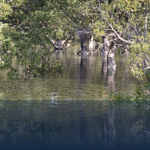 Oliver Weyl australien-natur51.jpg