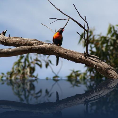 Oliver Weyl australien-natur54.jpg