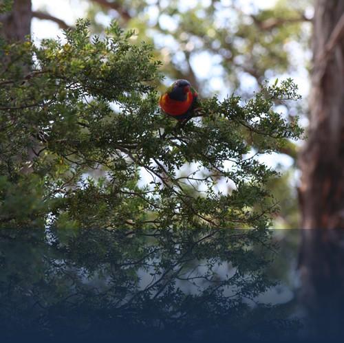 Oliver Weyl australien-natur57.jpg